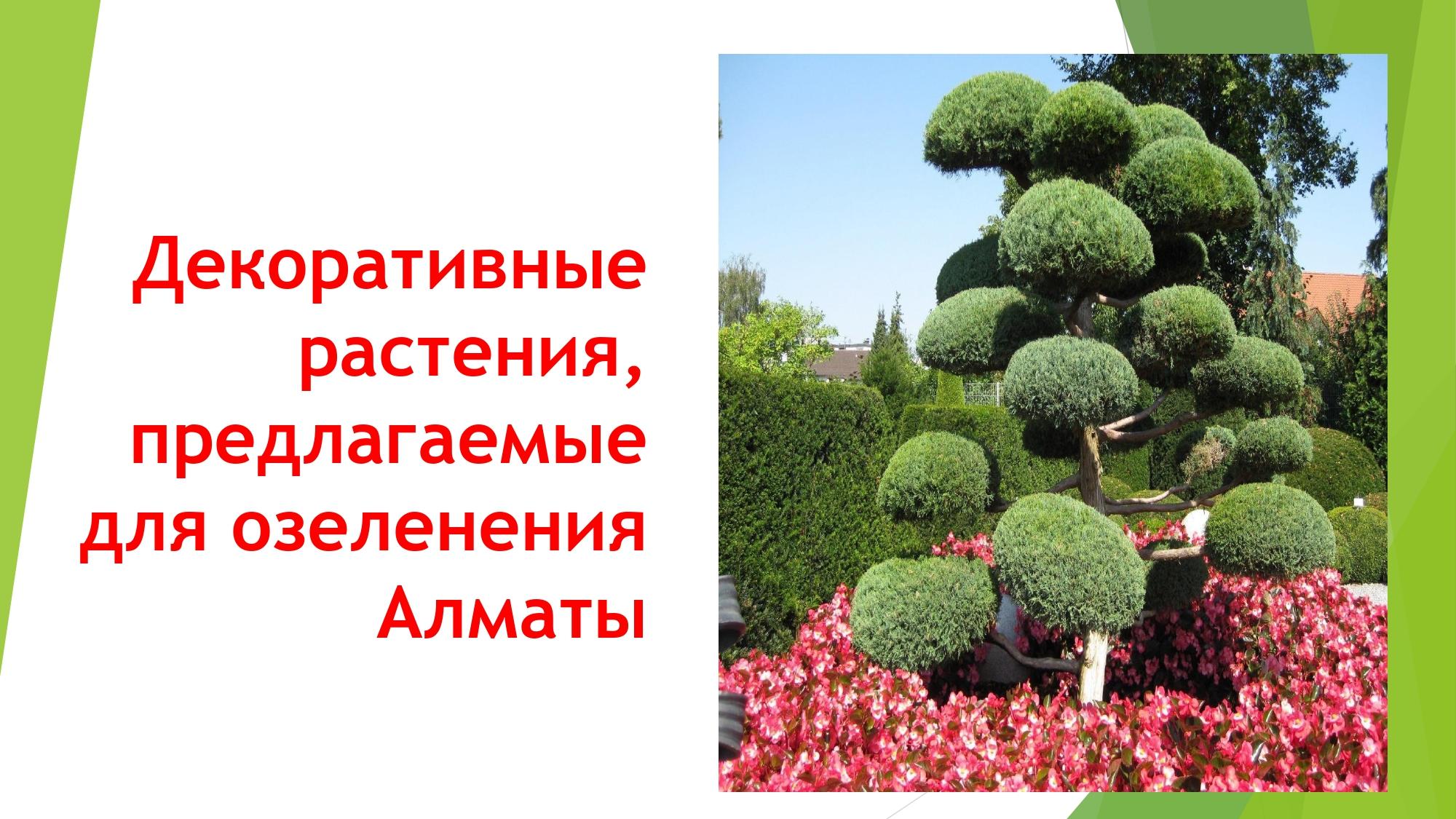 декорат.раст_page-0001