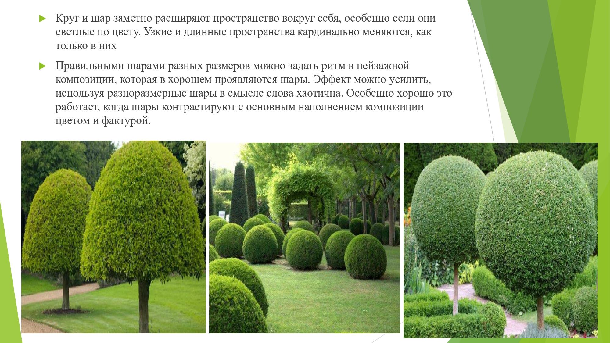 декорат.раст_page-0005
