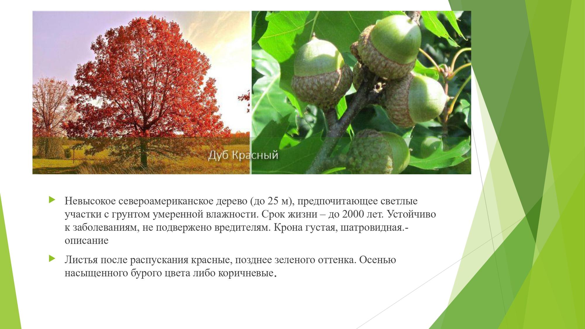 декорат.раст_page-0008