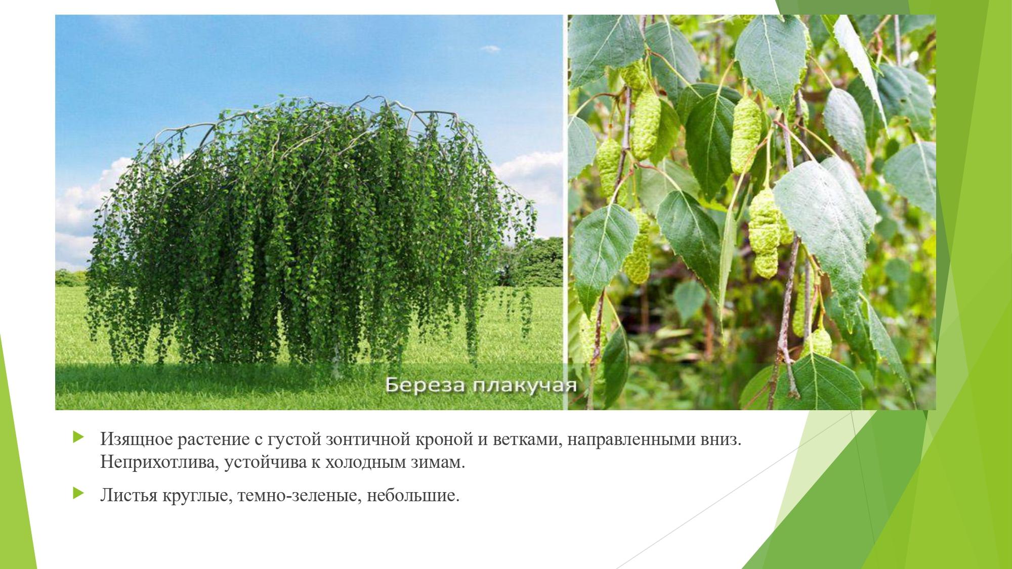 декорат.раст_page-0009