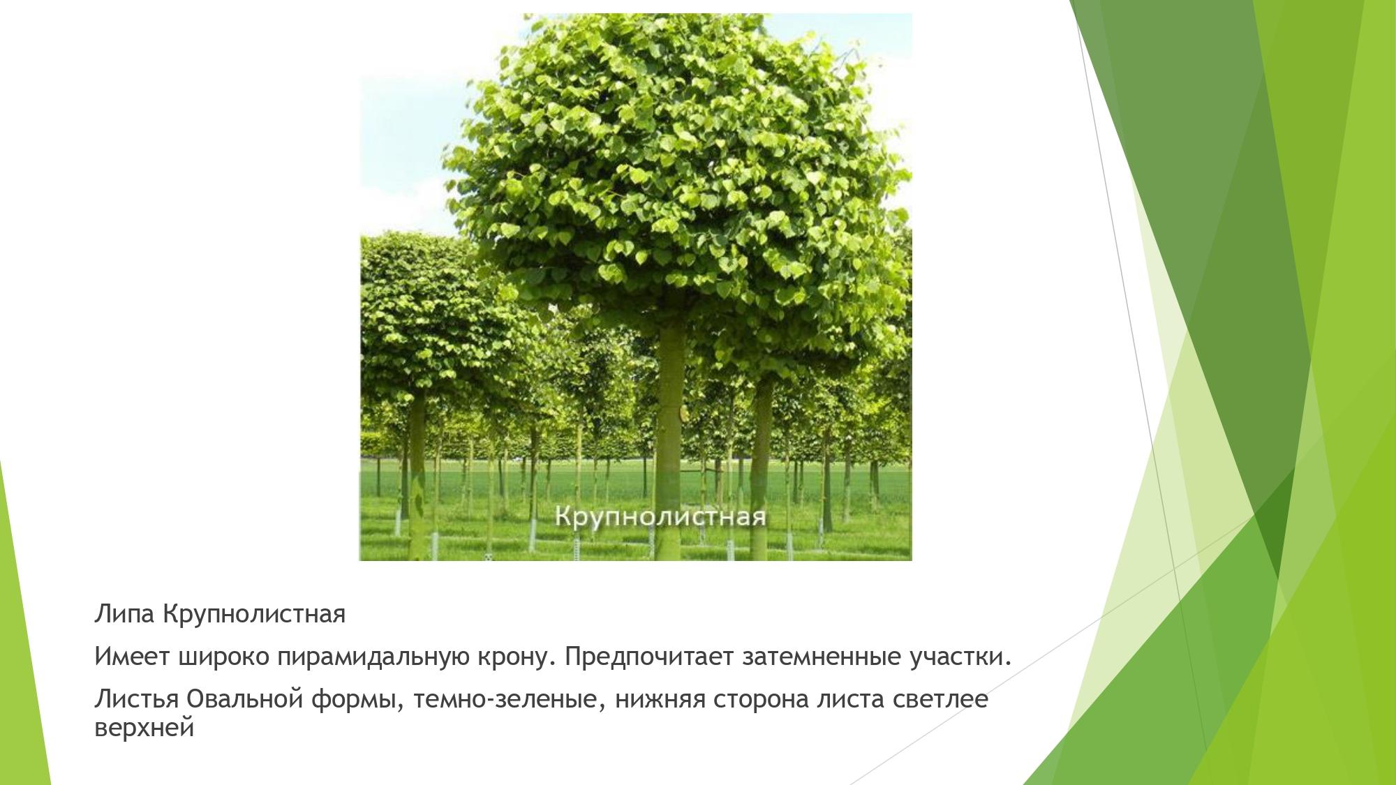 декорат.раст_page-0011