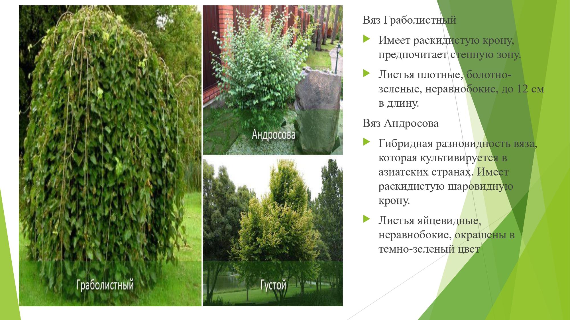 декорат.раст_page-0013
